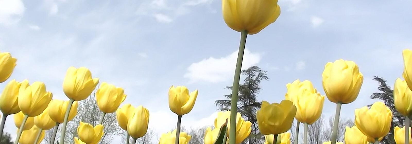 Spring image slide